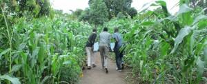 África: dignidade e esperança em um copo d'água
